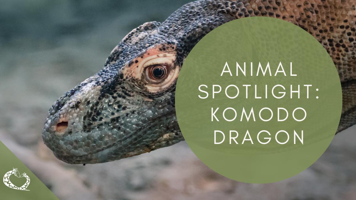 Reid-Park-Zoo-Expansion-Tucson-Arizona-Komodo-Dragon-Wordpress