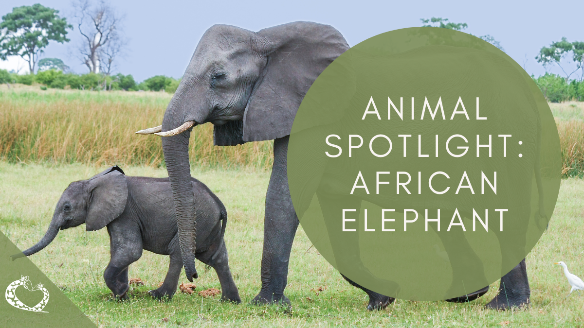 Reid-Park-Zoo-Expansion-Tucson-Arizona-African-Elephant-Wordpress