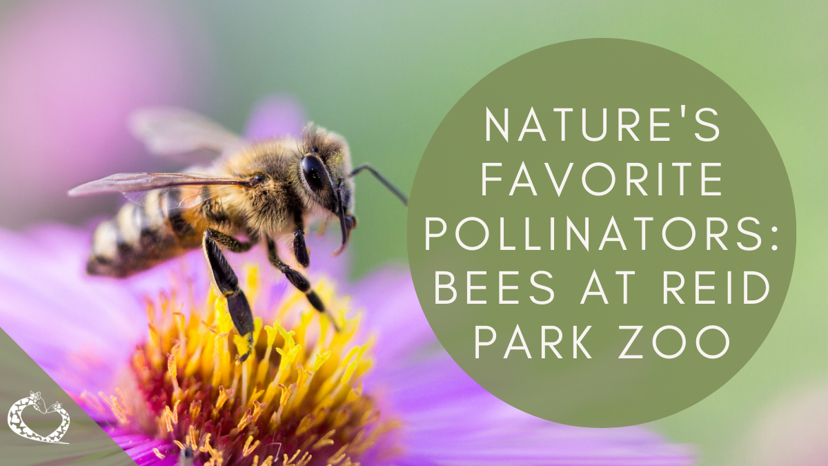 Reid-Park-Zoo-Expansion-Tucson-Arizona-Bees-Wordpress