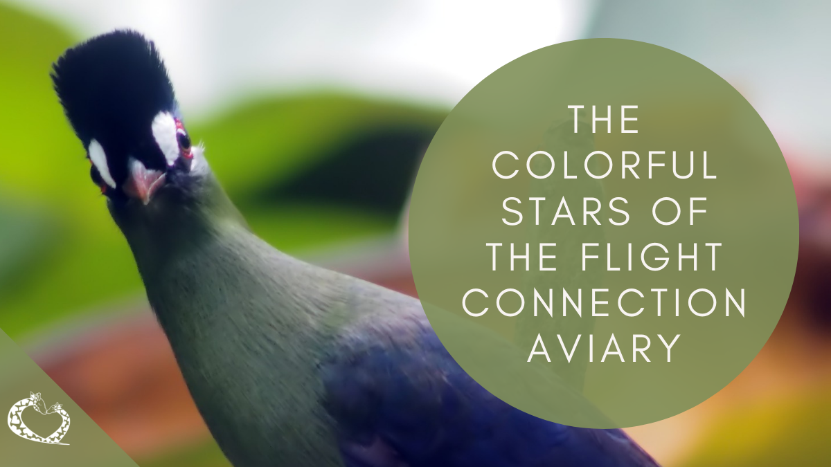 Reid-Park-Zoo-Expansion-Tucson-Arizona-Flight-Connection-Aviary-Wordpress
