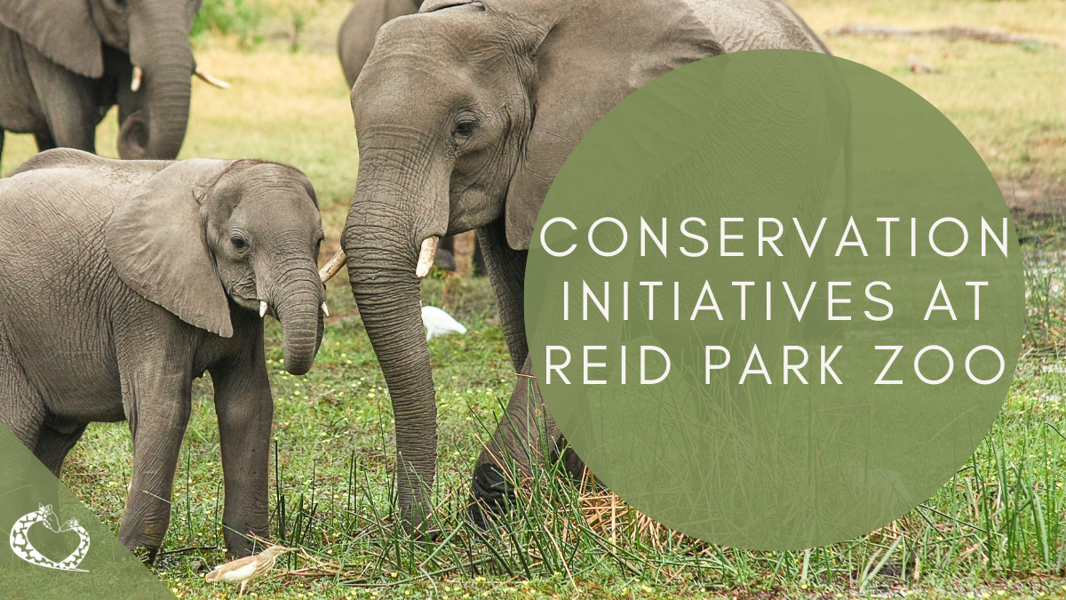 Reid-Park-Zoo-Expansion-Tucson-Arizona-Skink-Conservation-Wordpress