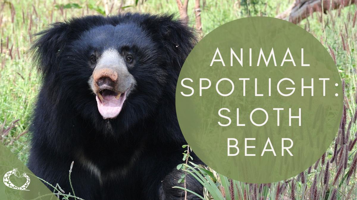 Reid-Park-Zoo-Expansion-Tucson-Arizona-Sloth-Bear-Wordpress