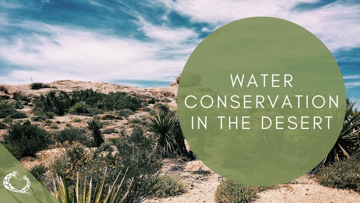 Reid-Park-Zoo-Expansion-Tucson-Arizona-Desert-Water-WP