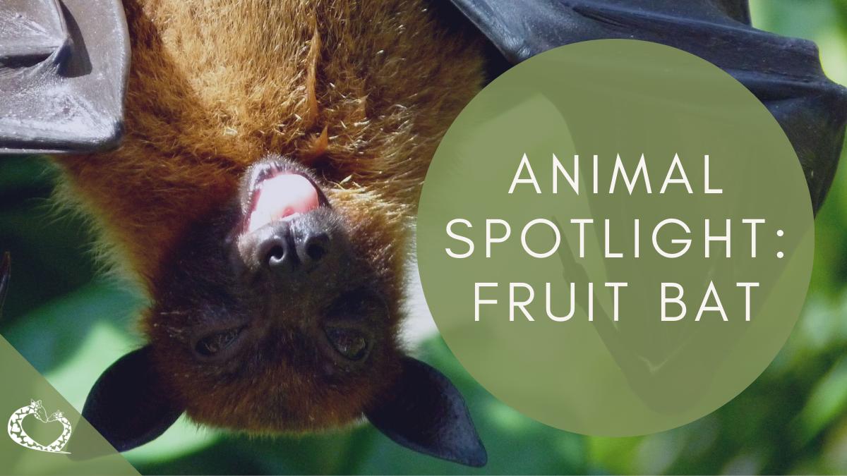 reid-park-zoo-expansion-tucson-arizona-fruit-bat-wp