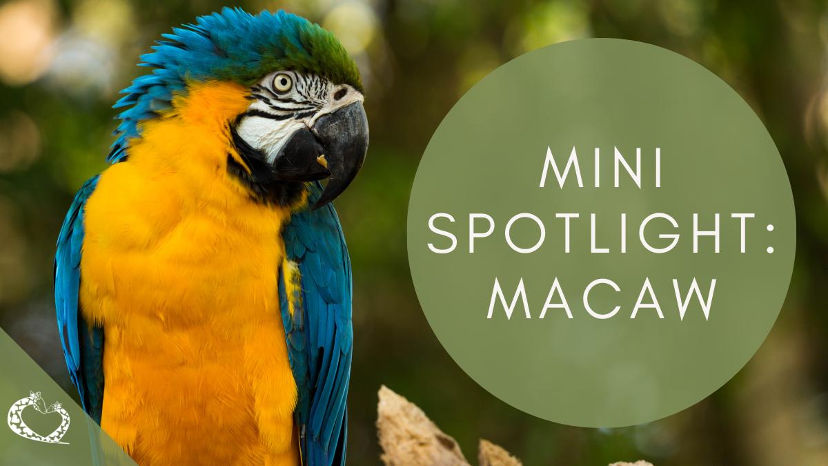 reid-park-zoo-expansion-tucson-arizona-macaw-wp