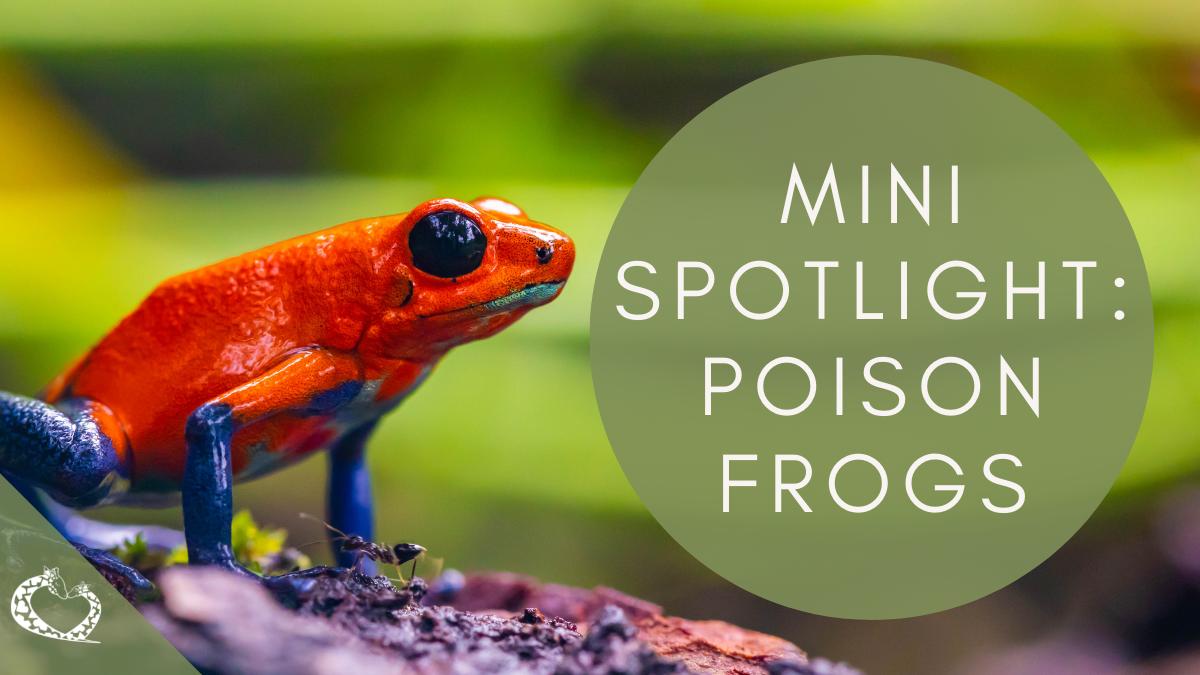 reid-park-zoo-expansion-tucson-arizona-poison-frogs-wp