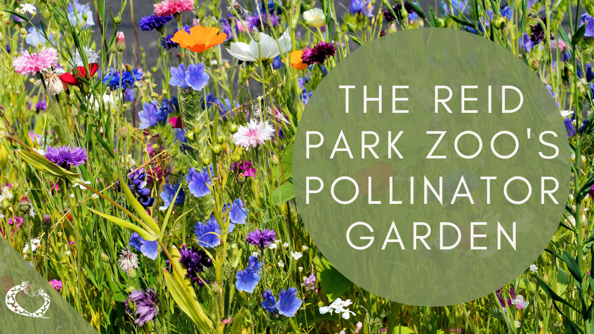 reid-park-zoo-expansion-tucson-arizona-pollinator-garden-wp