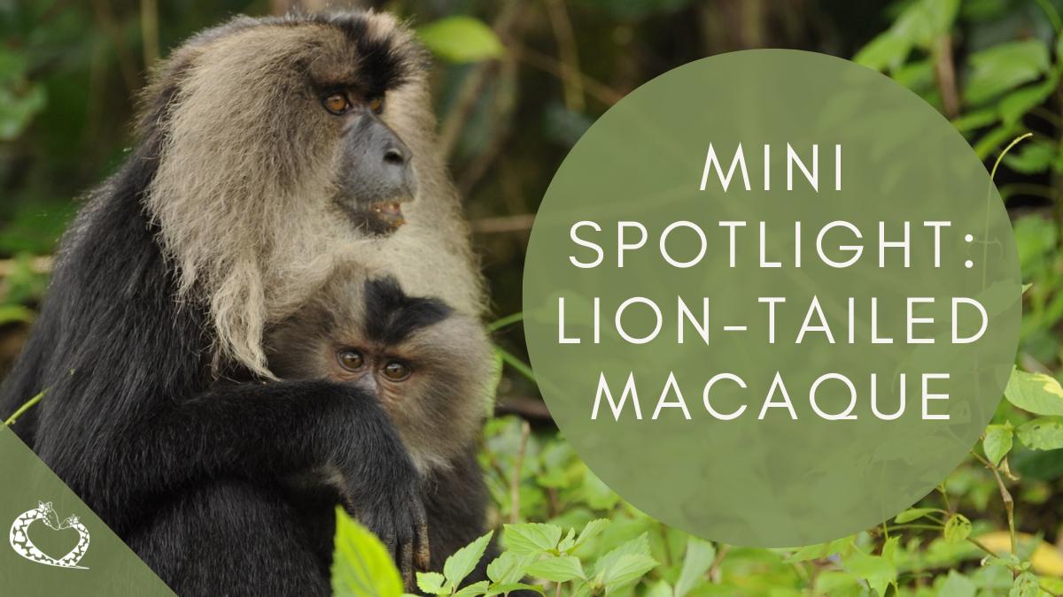 reid-park-zoo-expansion-tucson-arizona-lion-tailed-macaque-wp