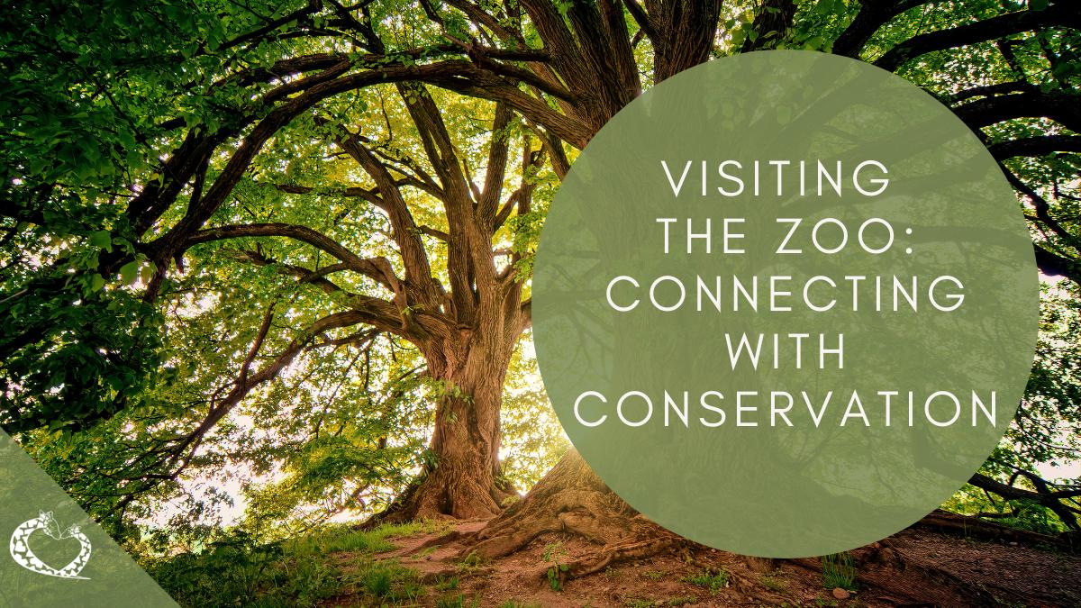 reid-park-zoo-expansion-tucson-arizona-zoo-conservation-wp